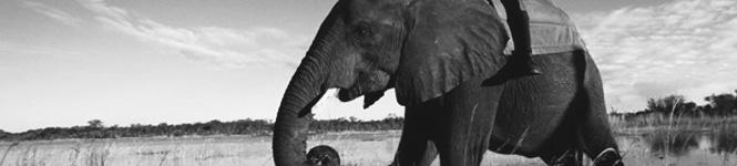 Elephant-Rider