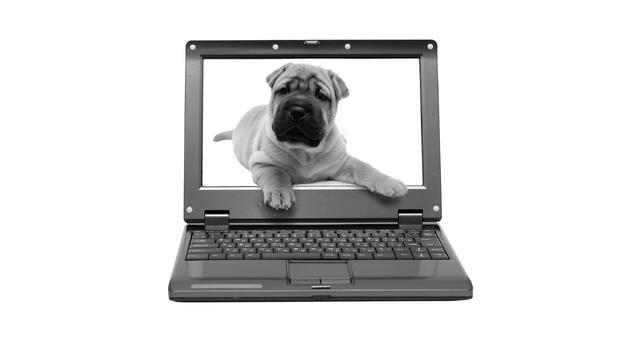 dog_blog